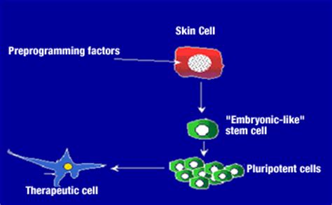 Stem Cell Research - Pros and Cons - Explorable